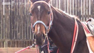 【DMMバヌーシー】タミーン2016の競走馬名決定!その名は「ドリームインパクト」【バヌーシー生活】